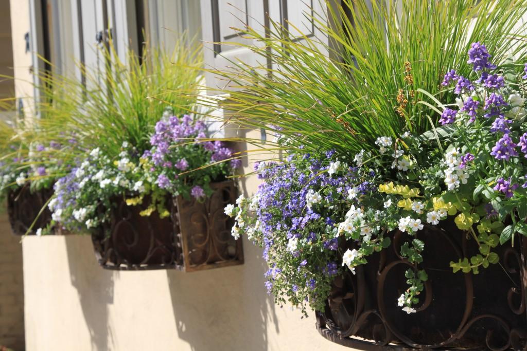 kompozycja balkonowa z trawą ozdobną