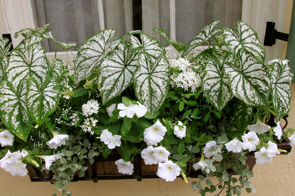 białe balkonowe