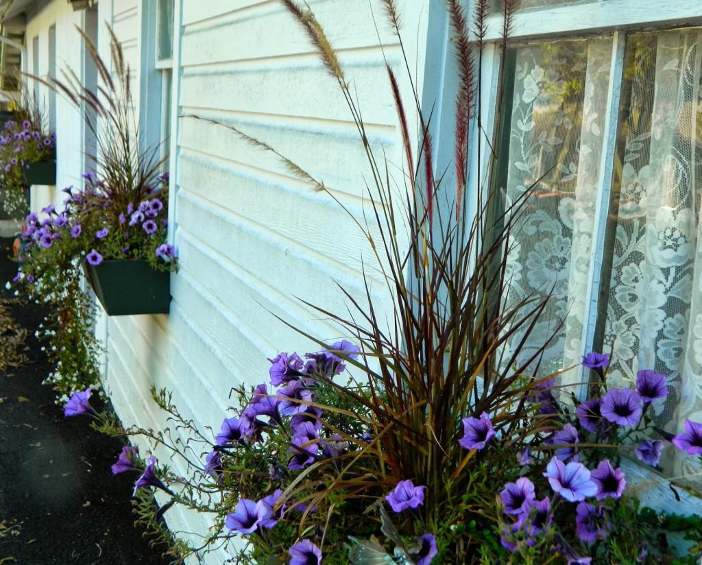 kompozycja balkonowa fiolet z trawą