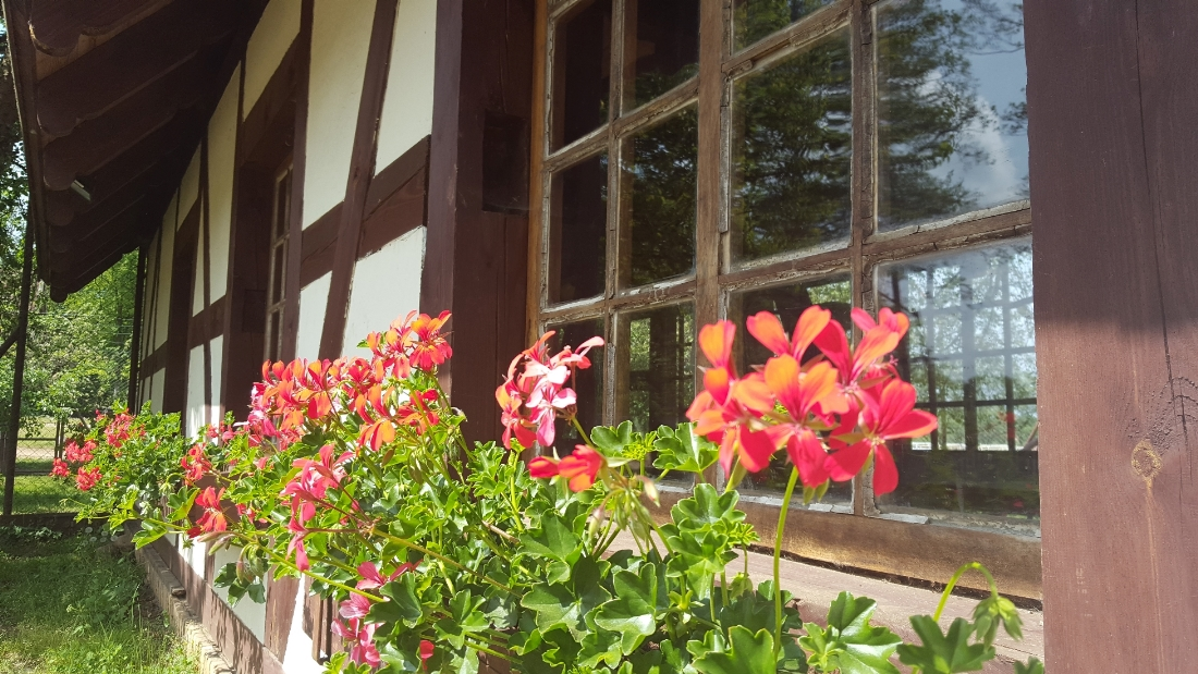 Spacer w Dolinie Charlotty - okna pełne kwiatów