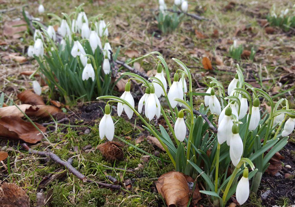 Wiosenne kwiaty czyli co zakwita najwcześniej
